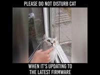 Śmieszny kociak