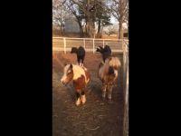 Kozy jeżdżące konno