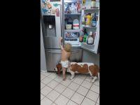Psi pomocnik