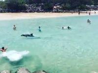Delfin wśród plażowiczów
