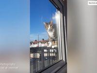 Kotka sama otwiera okno
